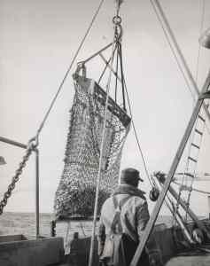 Scallop dredge, coast of America. Photo: NOAA Central Library Historical Fisheries Collection (inv. fish6084).
